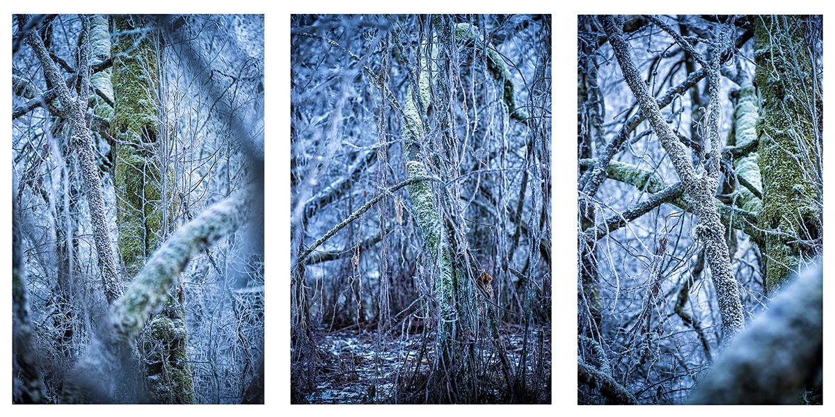 Fotoworkshop, Kunstfoto, künstlerische Fotografie, konzeptionelle Fotografie, Urwald, Moor, vereist, kalt