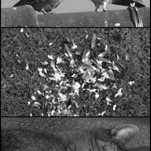 Grazer Fotoworkshops / Konzeptionelle Fotografie , Andrea Lang